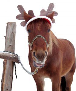 908644_christmas_horse_2_-_isolation