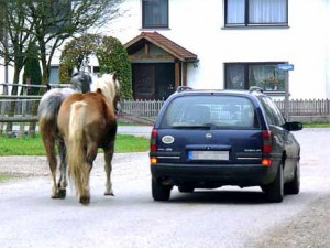 01-pferde-werden-am-auto-gezogen-in-leutkirch-baden-wuerttemberg-MBQF,templateId=renderScaled,property=Bild,height=349